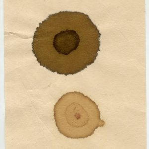 Photo of Bark pigment and bark tanning