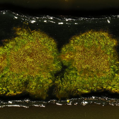 Sustainable Structural Colour from Bacteria